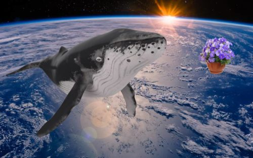 Sperm Whale and Bowl of Petunias in Space